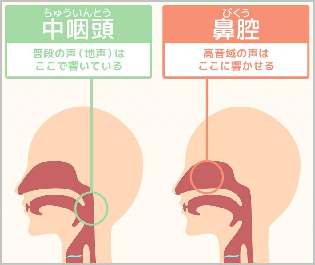 中咽頭と鼻腔の説明